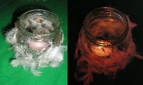Waxine lichthouders met veertjes
